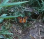 Butterfly at Yosemite